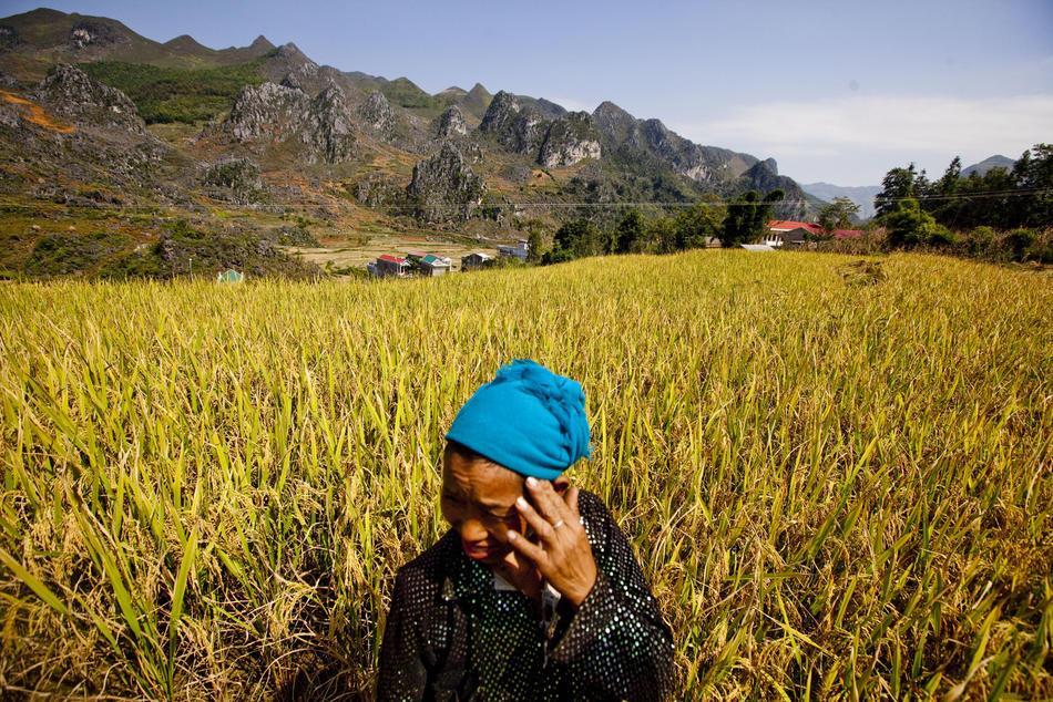 Будущее пшеницы
