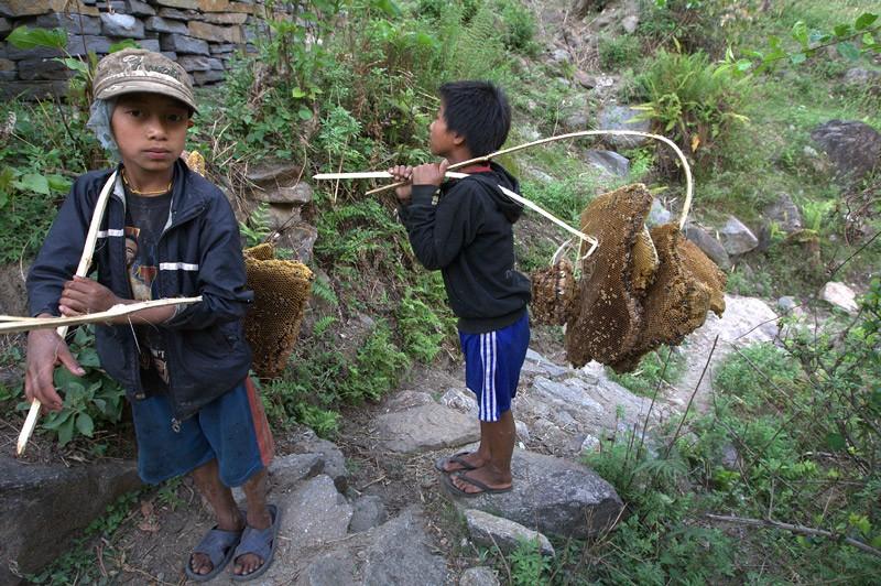 Охотники за гималайским мёдом.