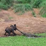 Слоненок и крокодил