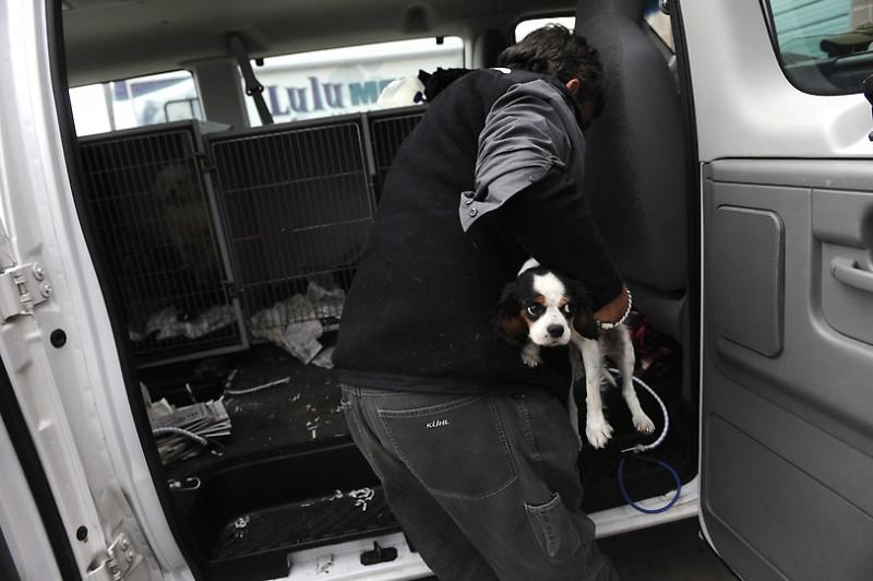 00 800x532 Как в Штатах решают проблему бездомных собак