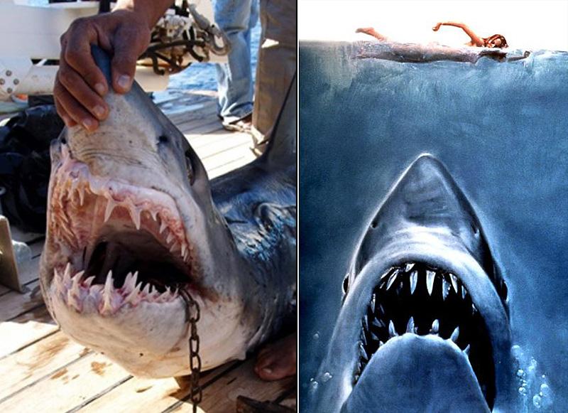 Нападения акул на туристов в Египте