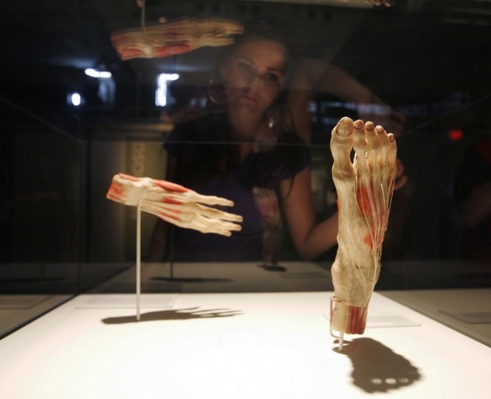 001s54hq 990x805 Выставка «Миры тела»   искусство или глумление?