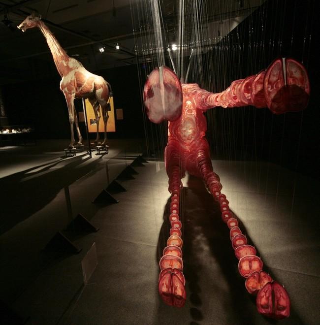 001s9gta Выставка «Миры тела»   искусство или глумление?