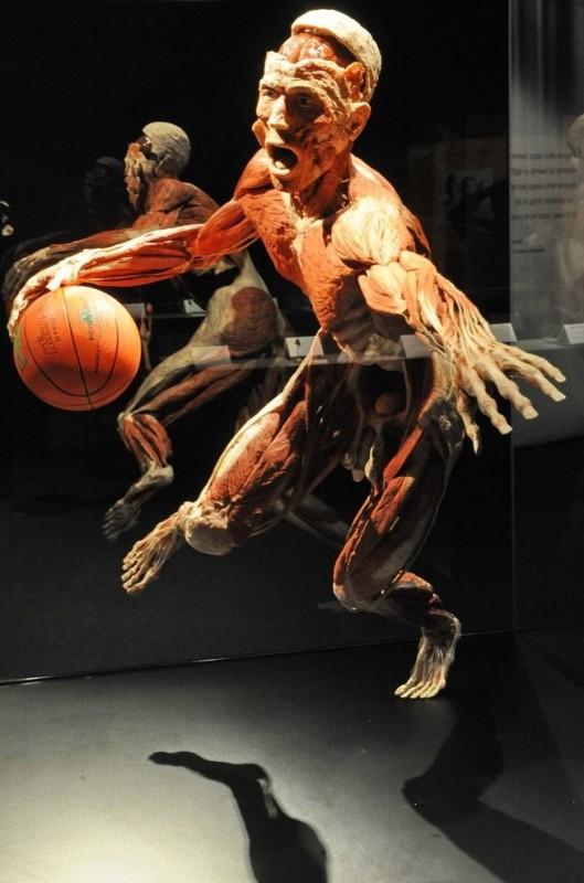 001sbhkf 529x800 Выставка «Миры тела»   искусство или глумление?