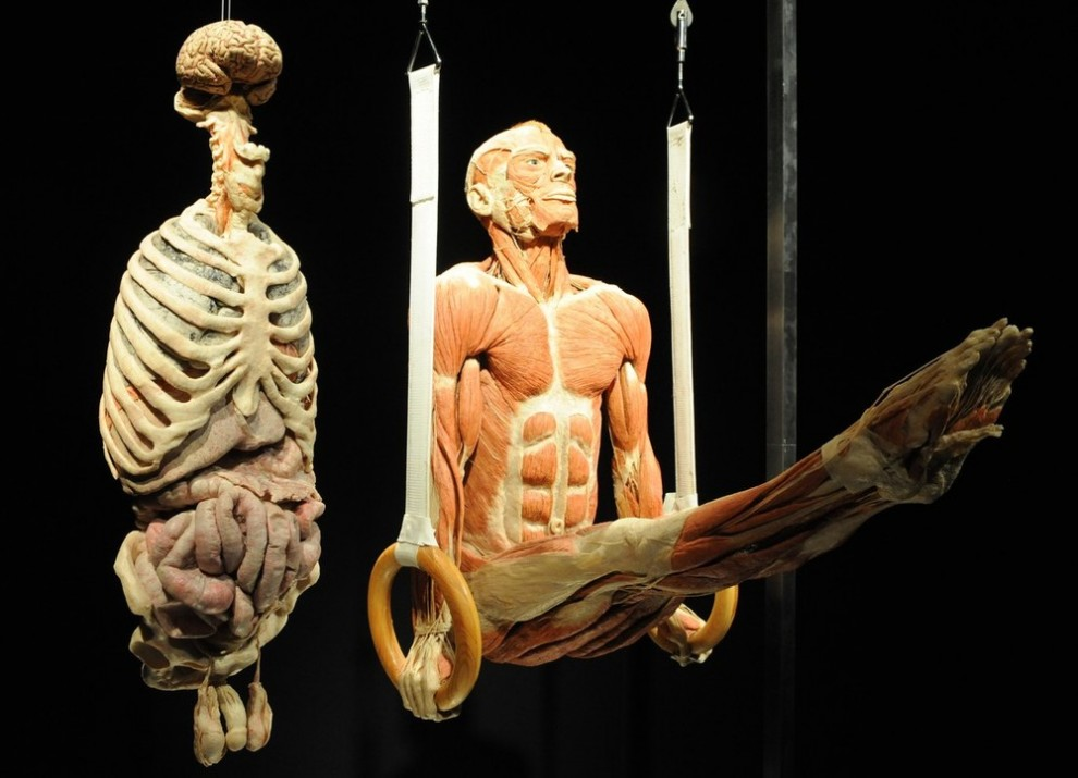 001sd9fx 990x715 Выставка «Миры тела»   искусство или глумление?