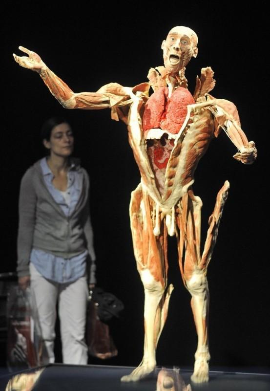 001sehzp 553x800 Выставка «Миры тела»   искусство или глумление?