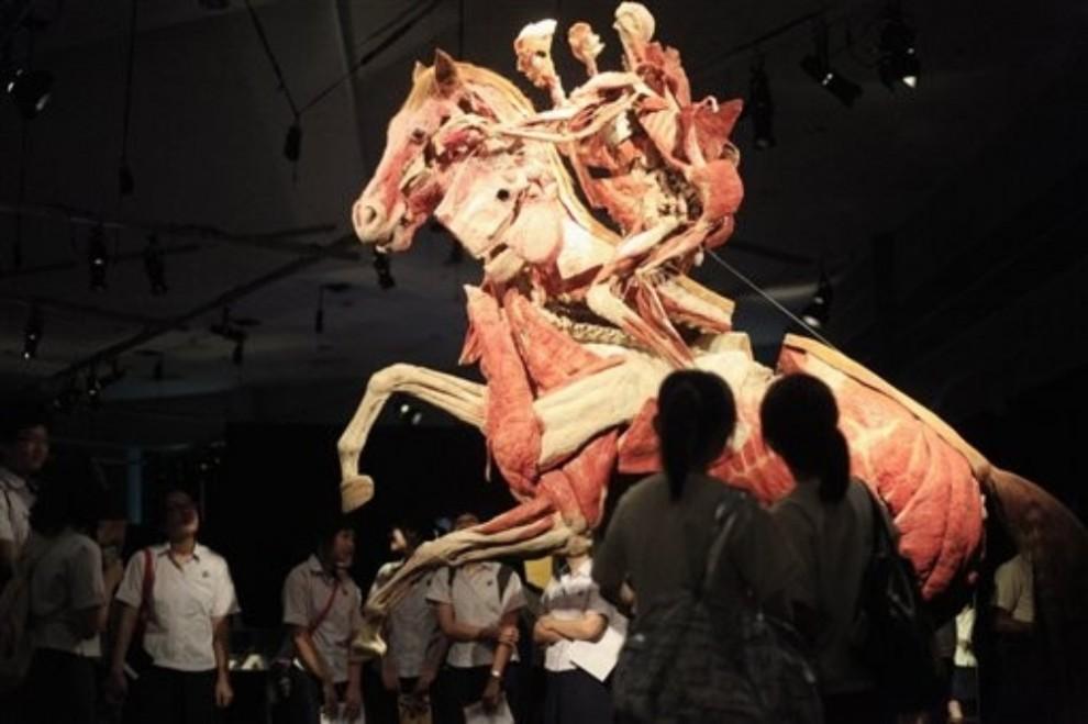 001sh7es 990x659 Выставка «Миры тела»   искусство или глумление?