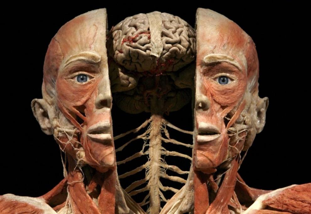 001sqy5s 990x681 Выставка «Миры тела»   искусство или глумление?