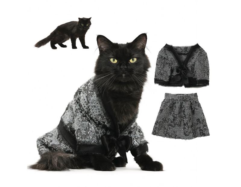 Во что одеть кошку на новый год