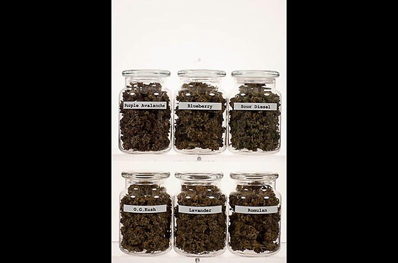 Inside Colorado's Marijuana Industry