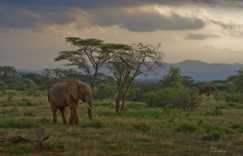Национальный заповедник Самбуру. Кения.