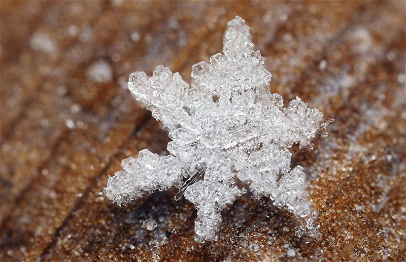 Мир снежинок и инея в макрообъективе Брайана Валентайна