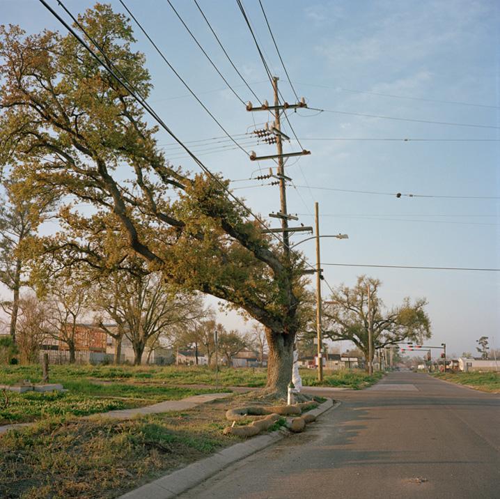 Все подряд.  Городские деревья (4 фото).