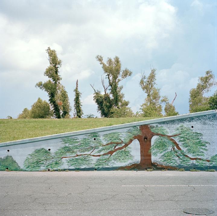 498 Городской лес