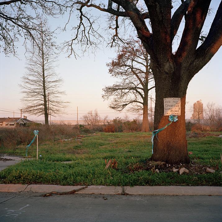 585 Городской лес