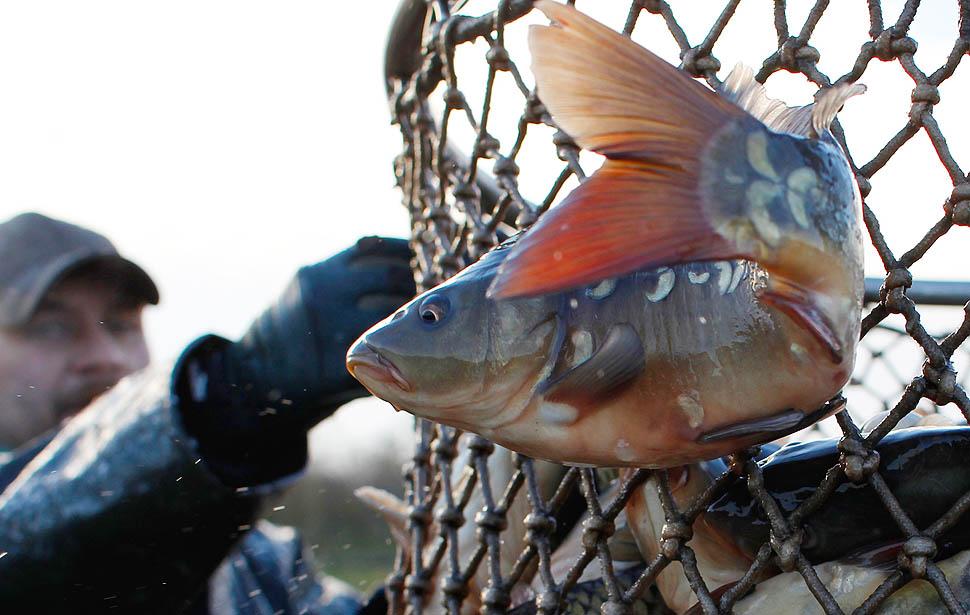 la 1130 pin10 Рыбалка по венгерски