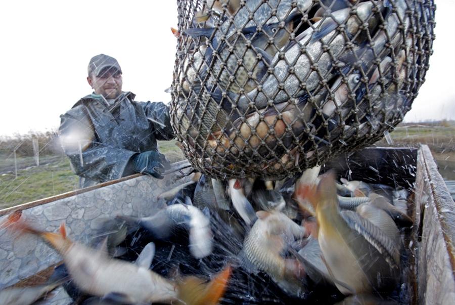 pb 101130 hungary fish 01.photoblog900 Рыбалка по венгерски
