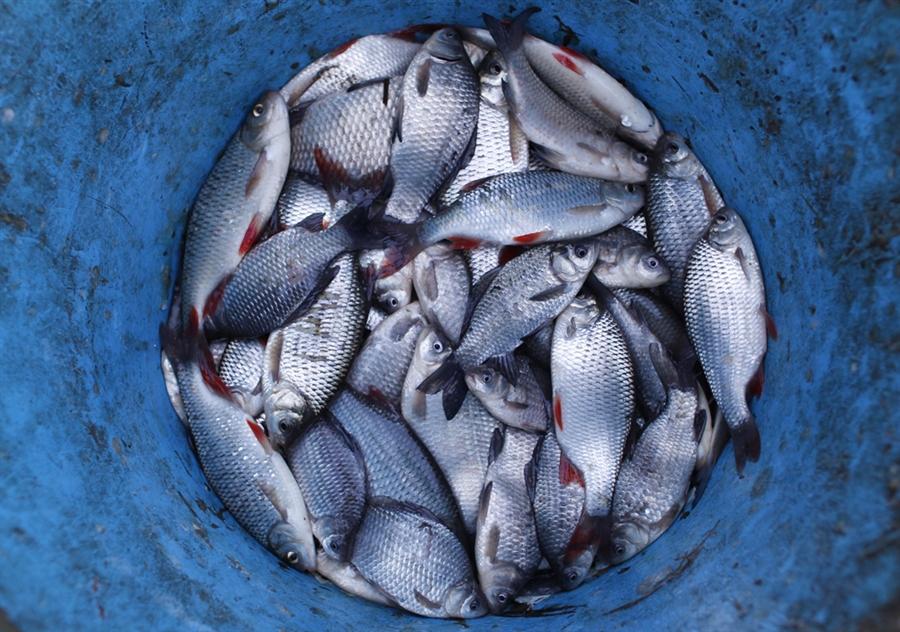 pb 101130 hungary fish 02.photoblog900 Рыбалка по венгерски