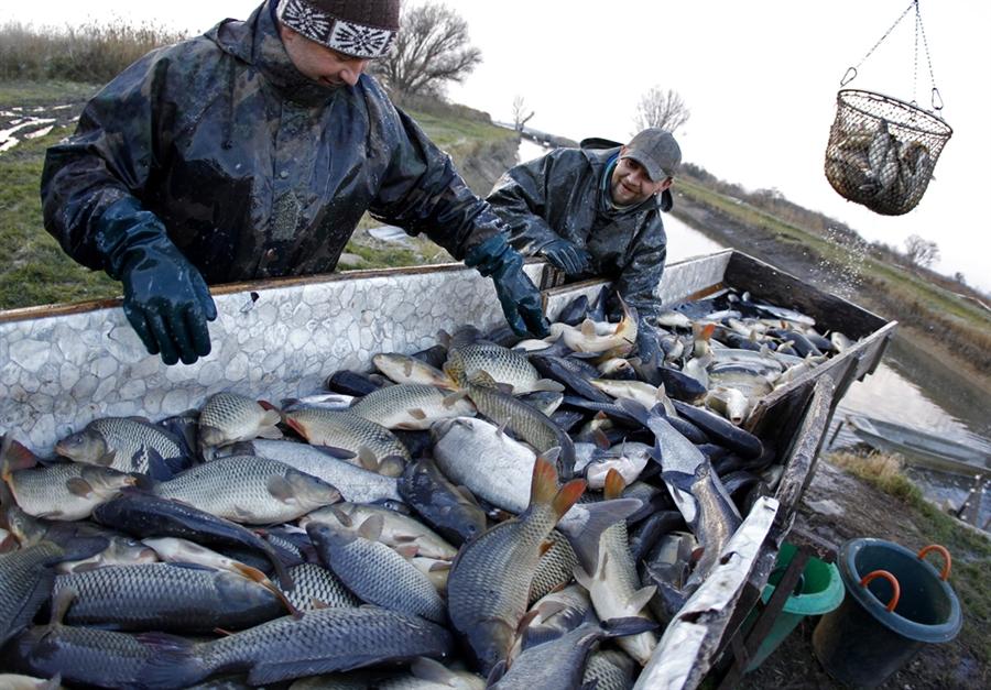 pb 101130 hungary fish 03.photoblog900 Рыбалка по венгерски