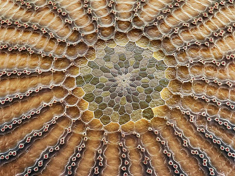 eggs03 Макрофо: Яйца насекомых