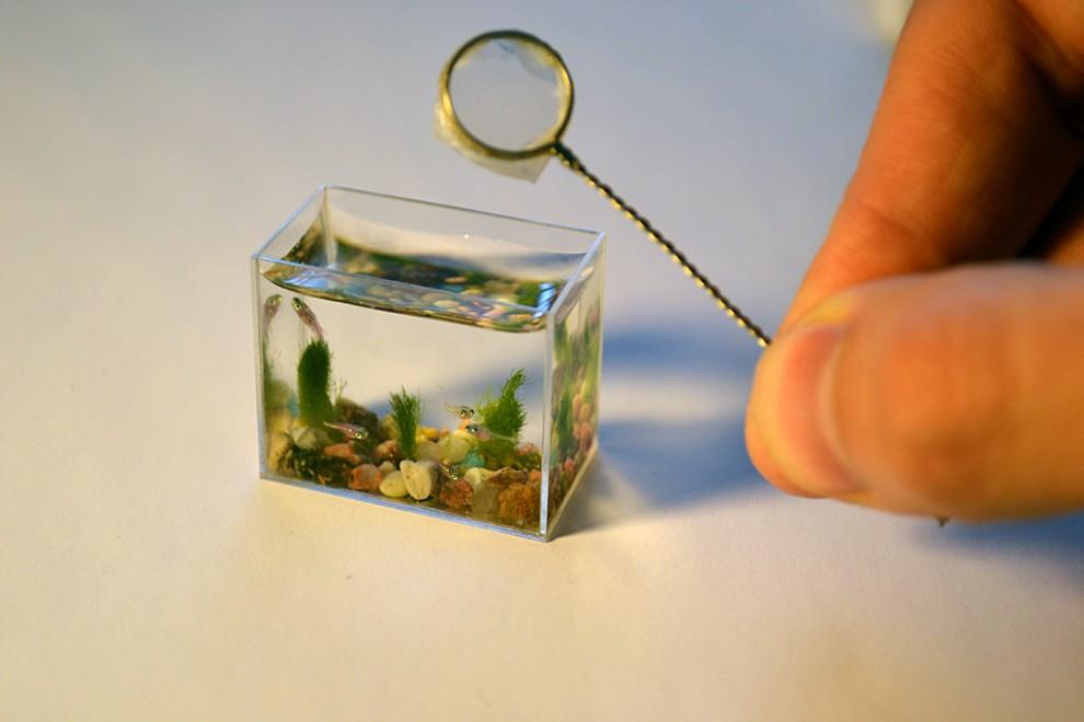 0000r3xs 990x660 Самый маленький в мире аквариум с рыбками