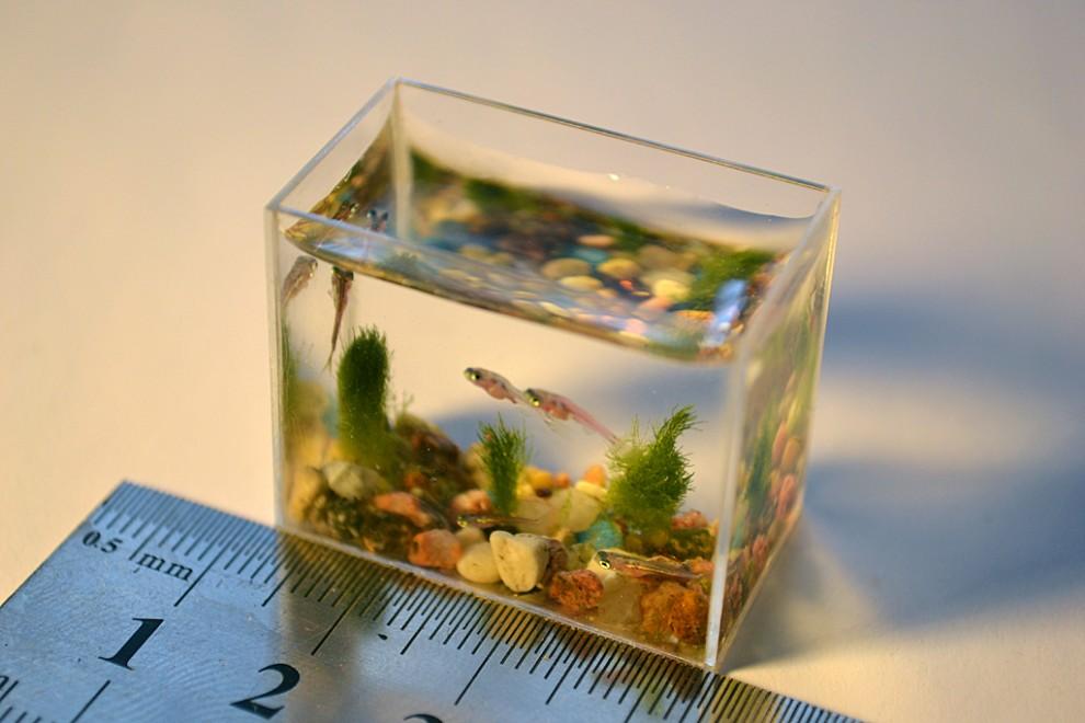 0000s90g 990x660 Самый маленький в мире аквариум с рыбками