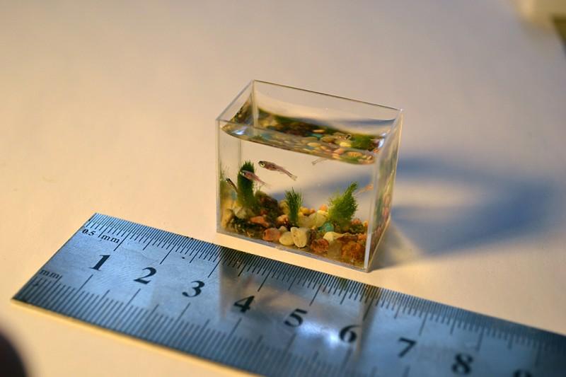 0000t23a 800x533 Самый маленький в мире аквариум с рыбками