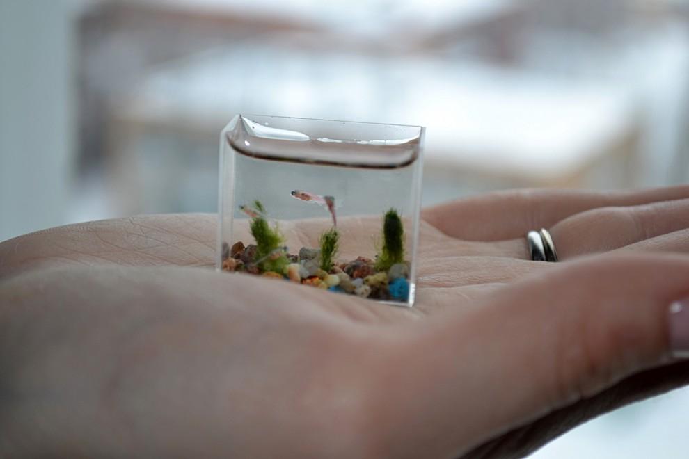 0000w7xh 990x660 Самый маленький в мире аквариум с рыбками