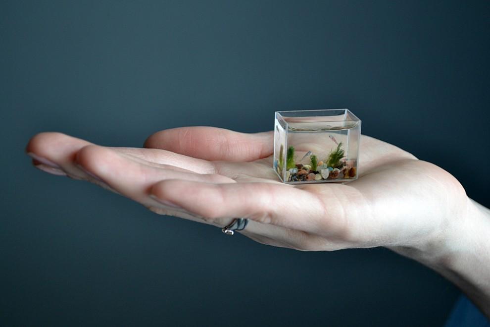 0000yts8 990x660 Самый маленький в мире аквариум с рыбками