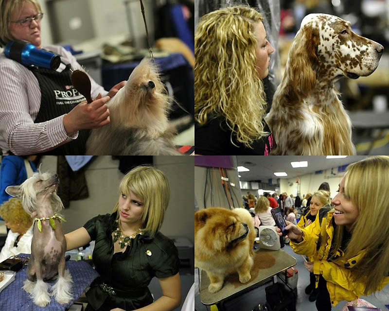 0034 Выставка собак кинологического клуба Вестминстер 2011