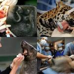 Животные у стоматолога