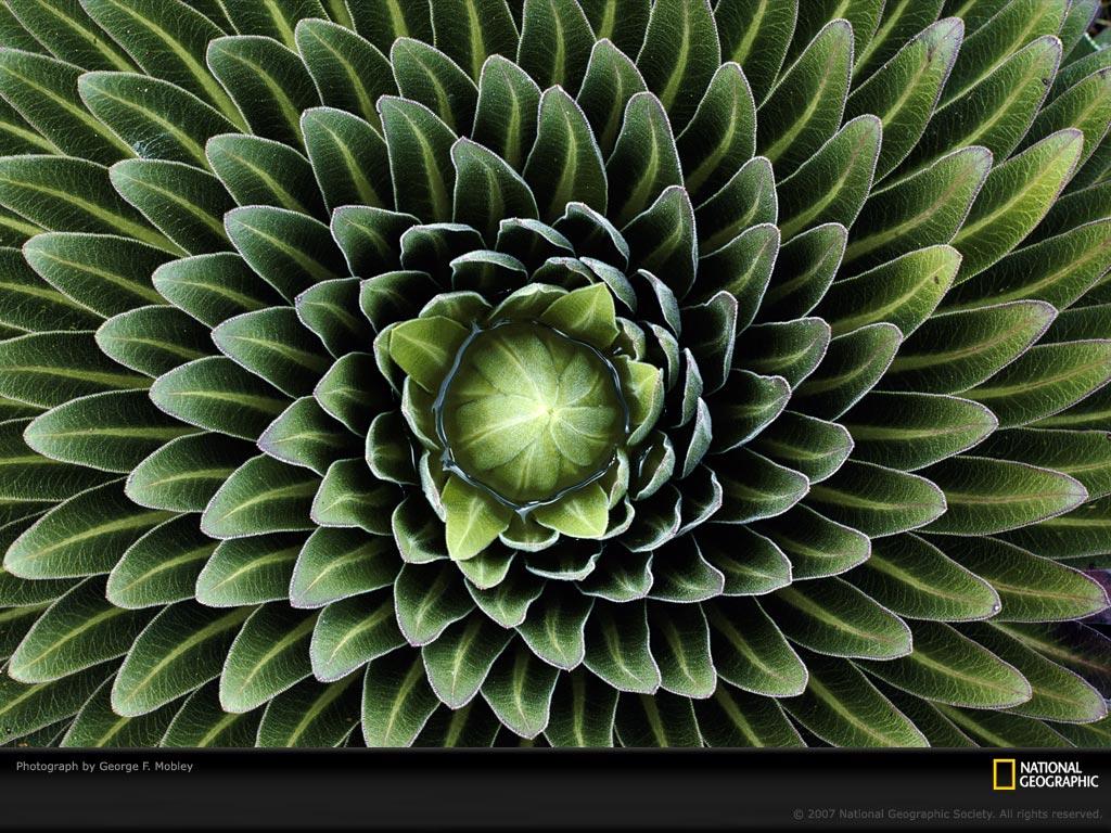 0247 Узоры природы: Флора