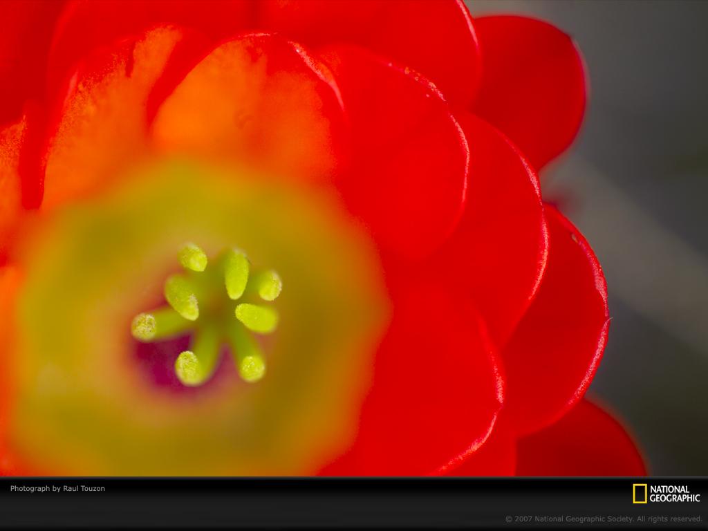 0643 Узоры природы: Флора