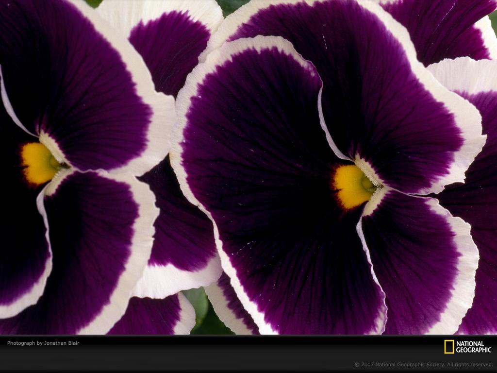 0740 Узоры природы: Флора