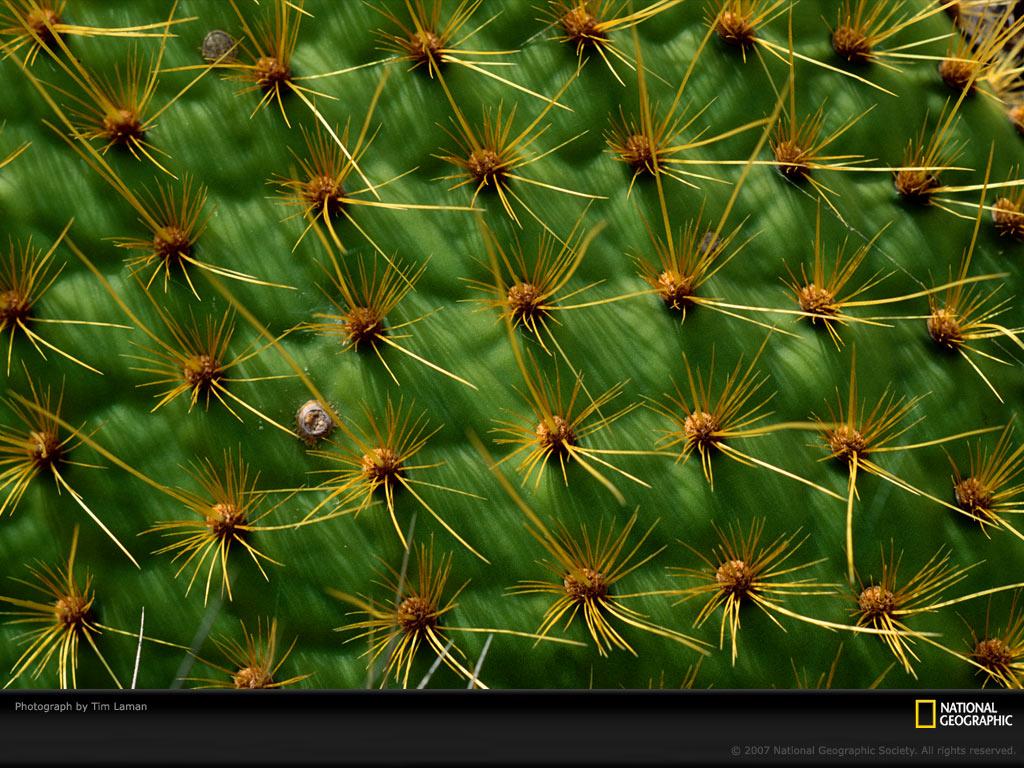 0941 Узоры природы: Флора