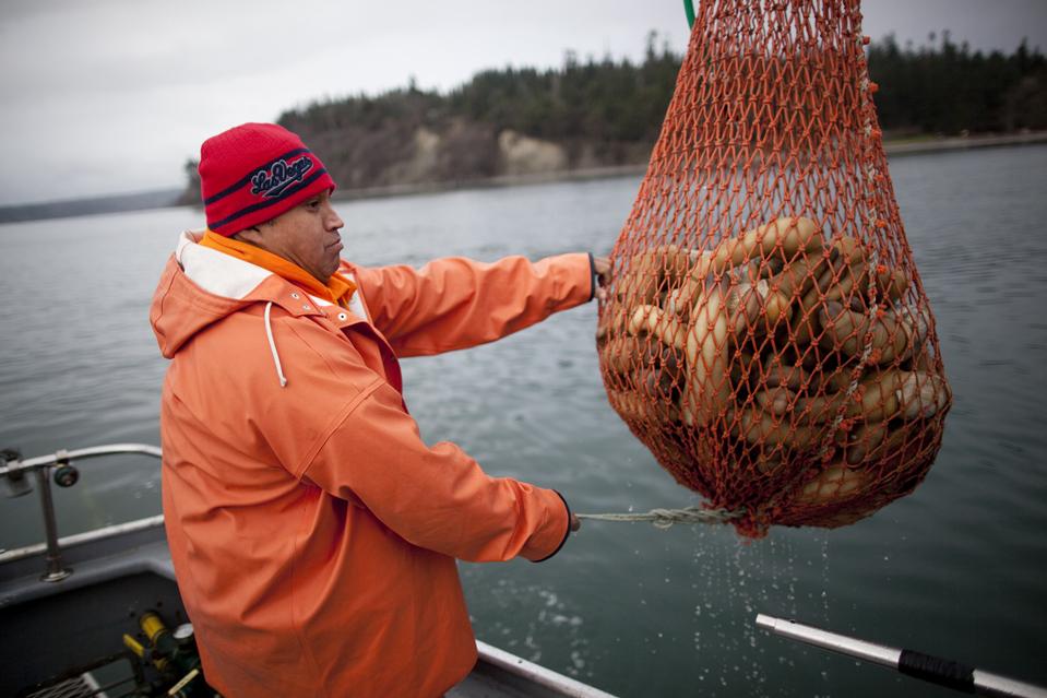 Большая награда за большой моллюск