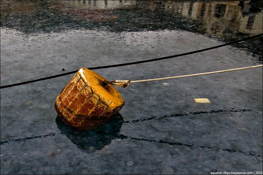 Нашествие медуз в Балаклавскую бухту