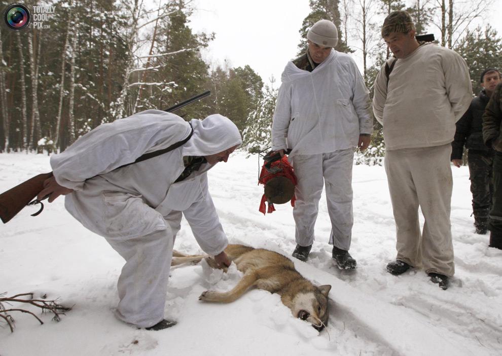 Охотники с убитым волком в лесу после охоты.  (REUTERS/Vasily Fedosenko)
