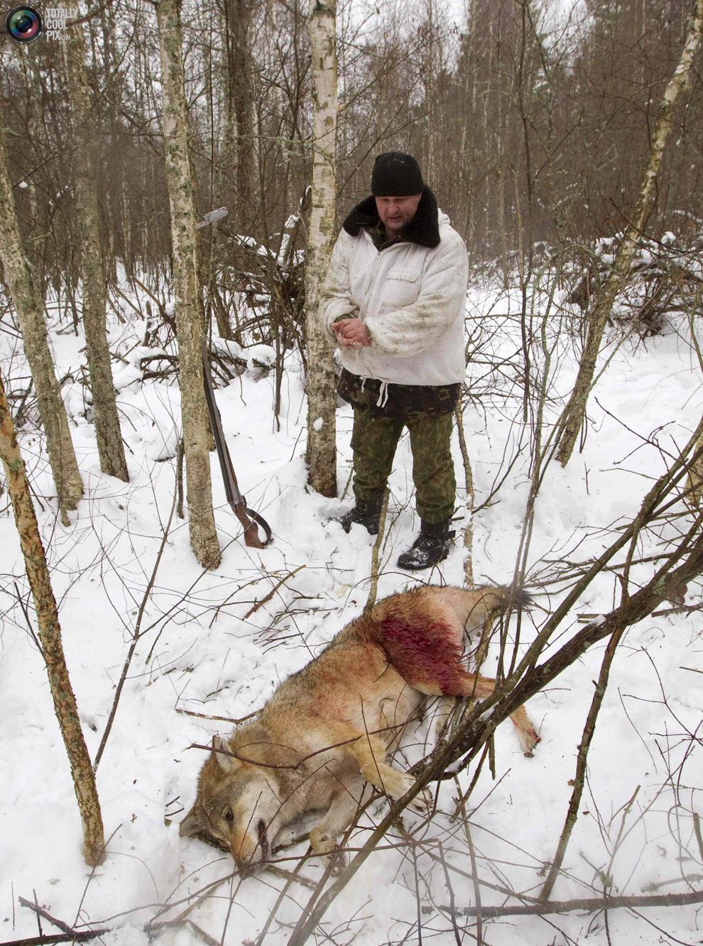 15. Охотники снимают шкуру убитого волка недалеко от