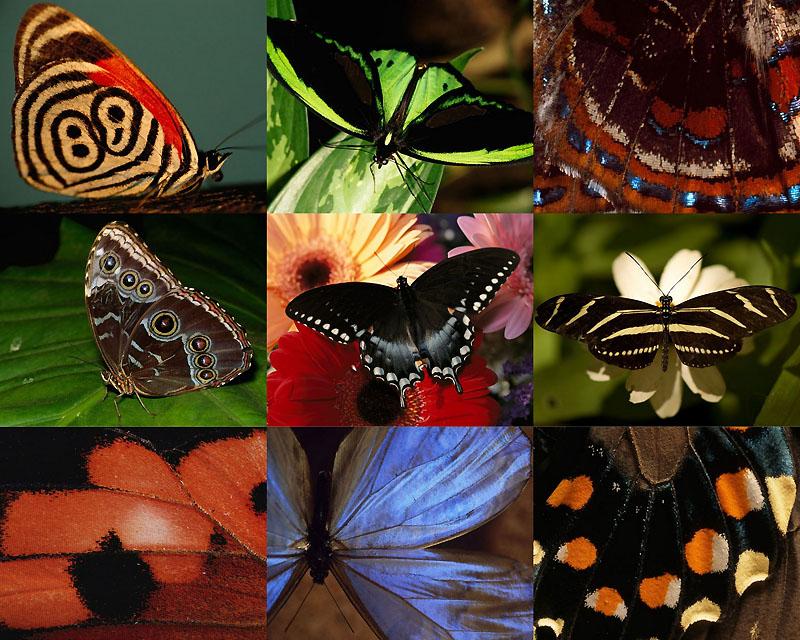 0021 Узоры природы: Бабочки