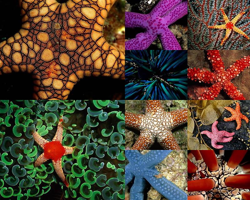 0040 Узоры природы: Морские создания