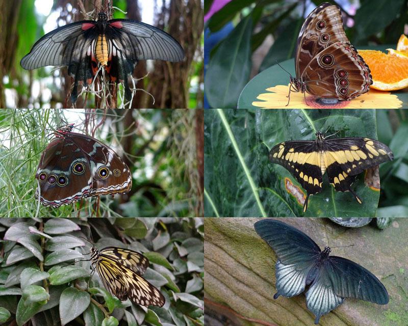 006 Выставка бабочек в саду Уизли