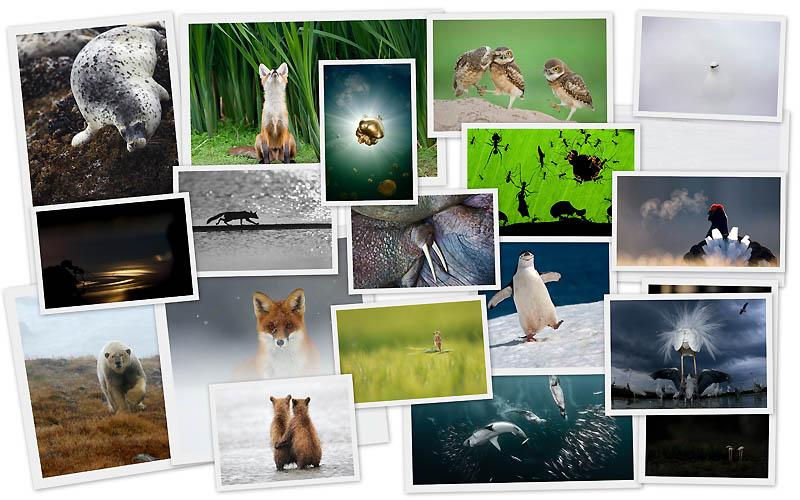 0081 Снимки дикой природы с конкурса Золотая Черепаха