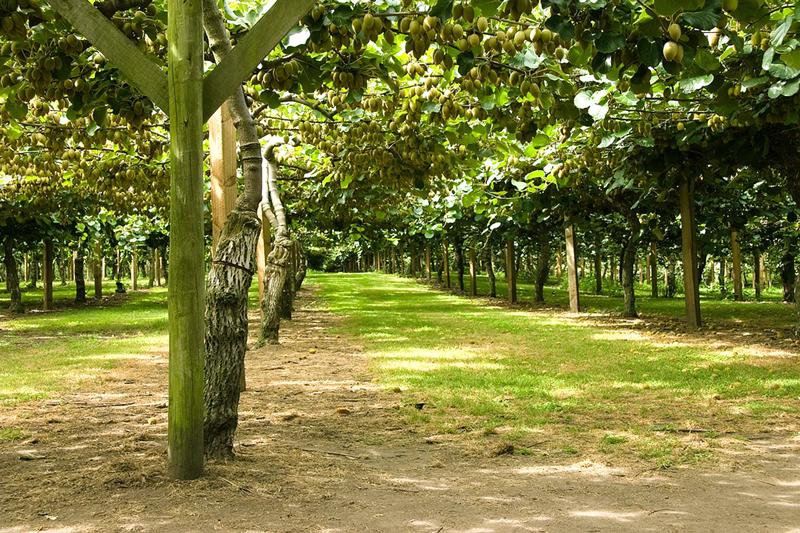 Фотографии удивительных деревьев