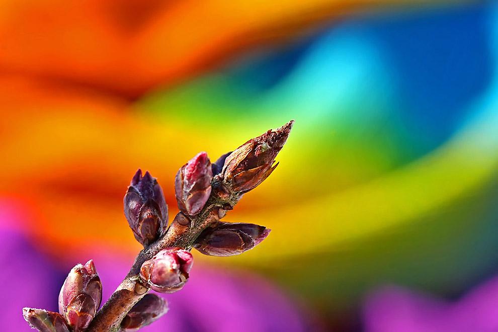 Яркие краски весны