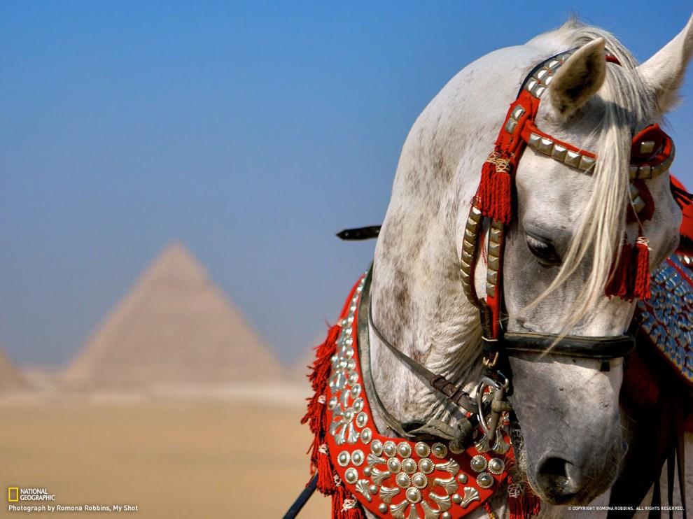 291 990x742 Путешествуй вместе с National Geographic