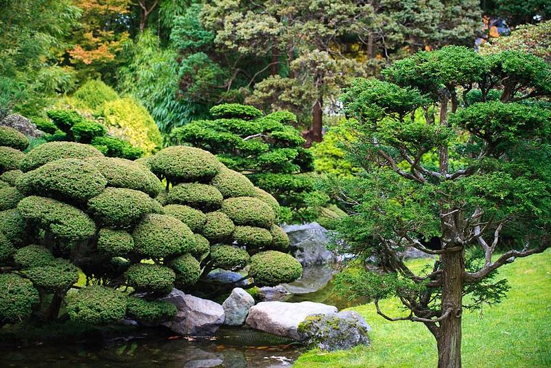 2911 японский чайный сад в сан франциско