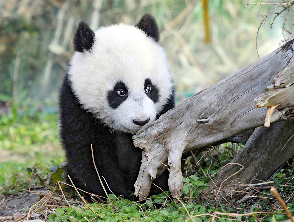 Животные в фотографиях: 21-27 марта 2011