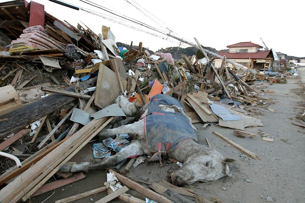 j14 RTR2KA42 Япония: через две недели после землетрясения
