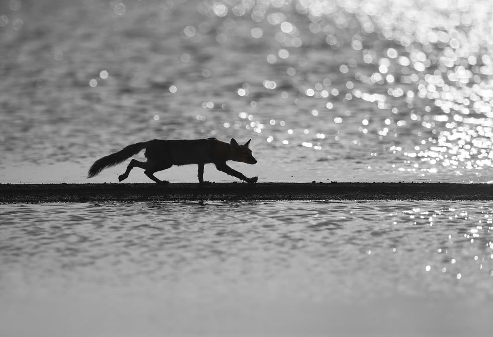 moseikin Снимки дикой природы с конкурса Золотая Черепаха